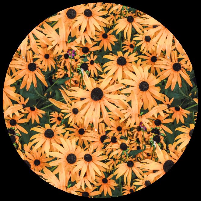 Orange Vintage Flower Photo Floral Pattern – love-fi