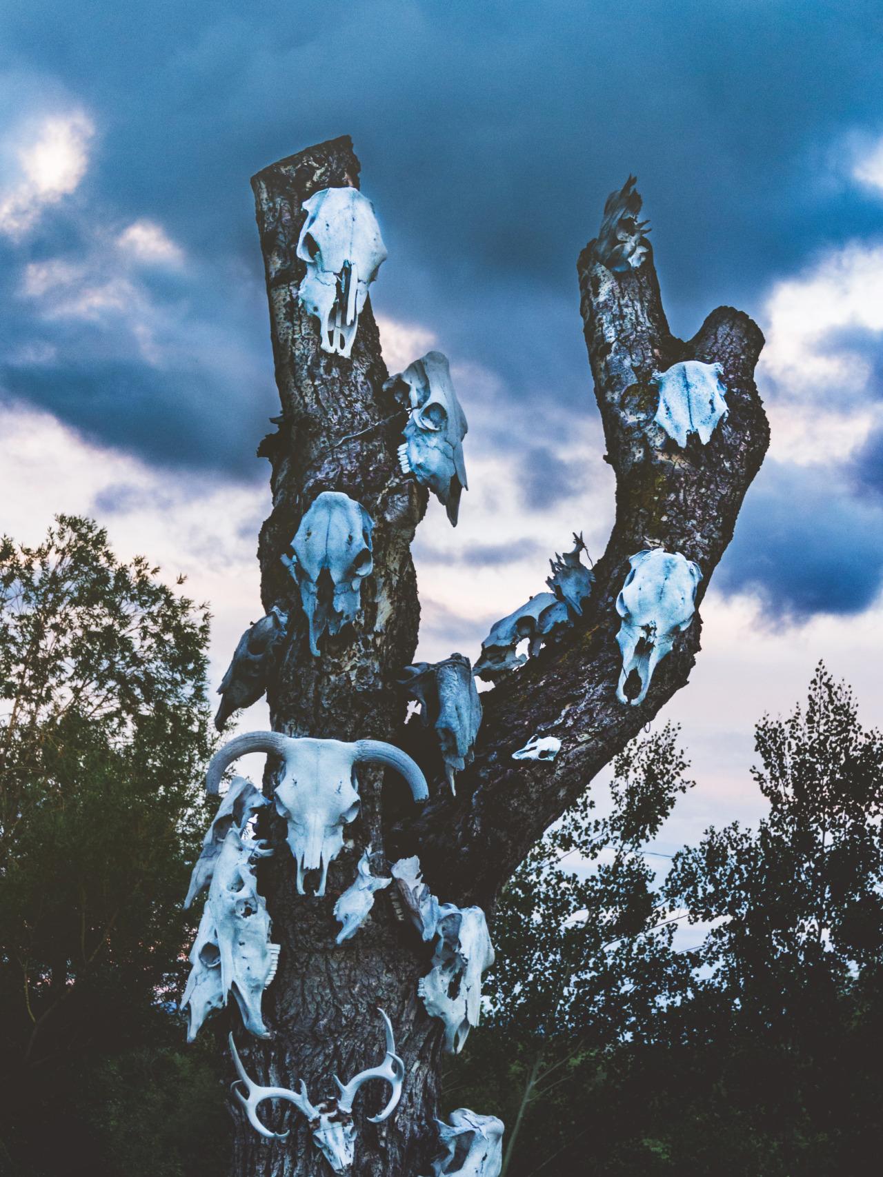 Roadside Decor. Tree of Skulls, Nature Photography Prints