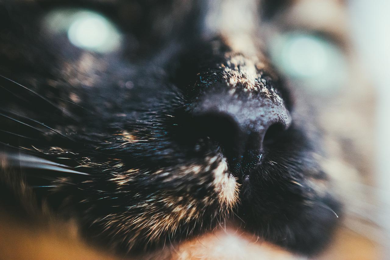 Bokeh Eye Surprise. Macro Tortie Cat Photography.