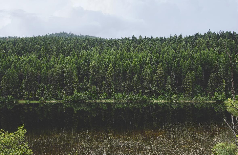 Fresh Air. Landscape Forest Photograph