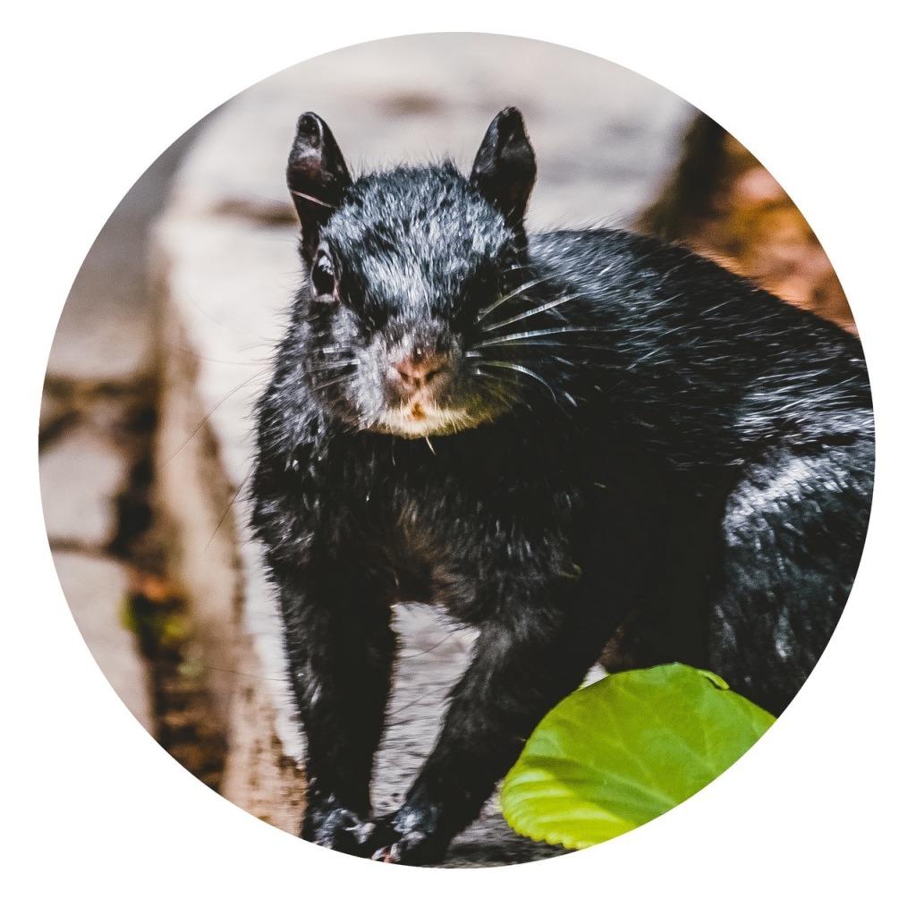 Shades Of Squirrel by Love-fi.com, Stephen Geisel