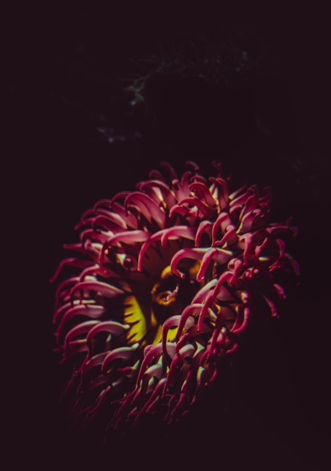 Aqua Flower Photograph
