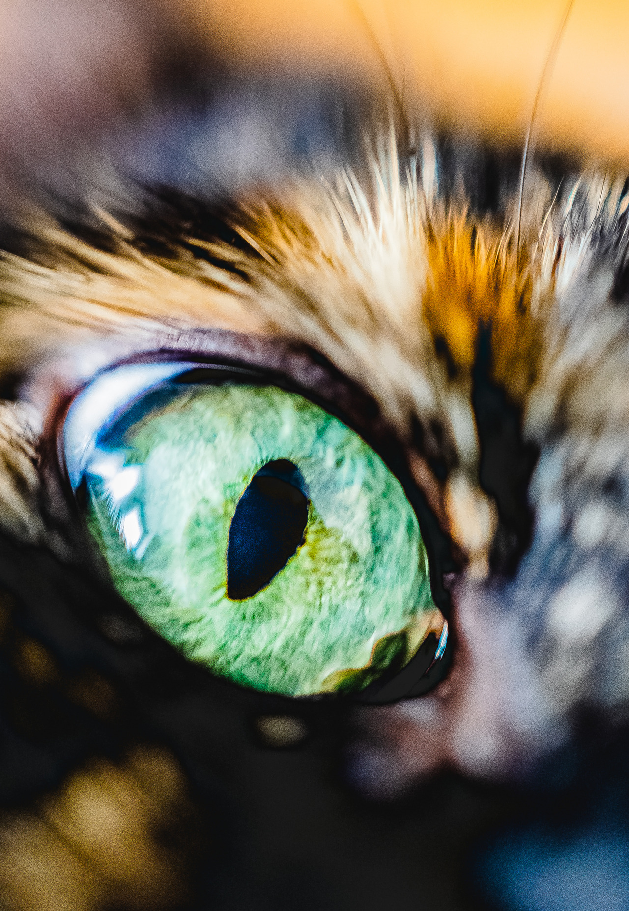 Emerald Eye, Lens Sniff Photo
