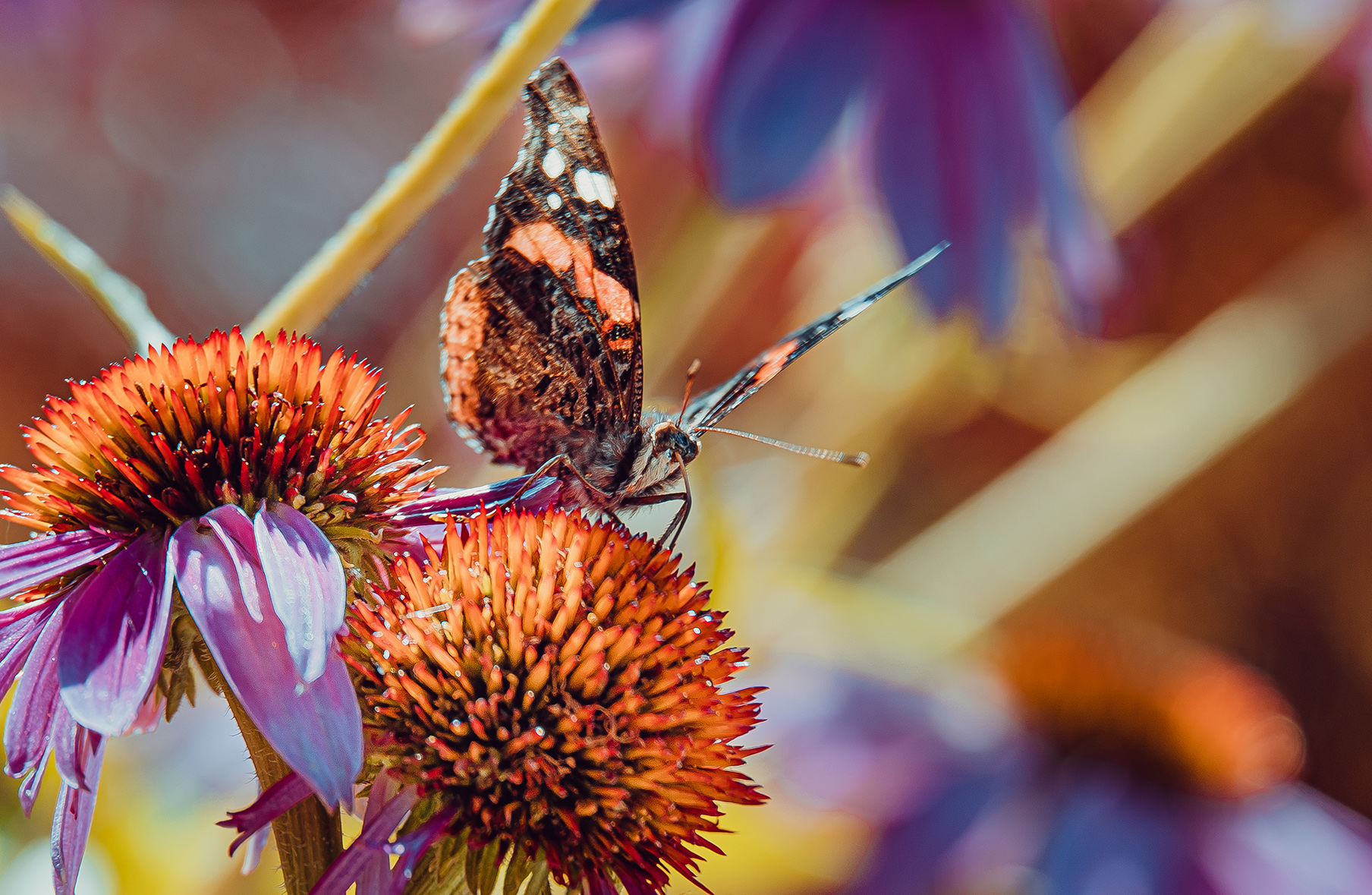 Landing Pad. Butterfly Photograph.