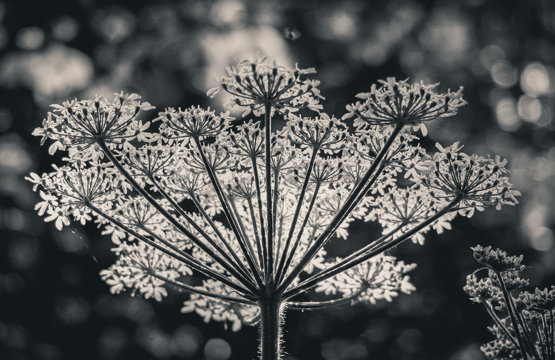 Forest's Crown. Nature Photography. By Stephen Geisel, Love-fi