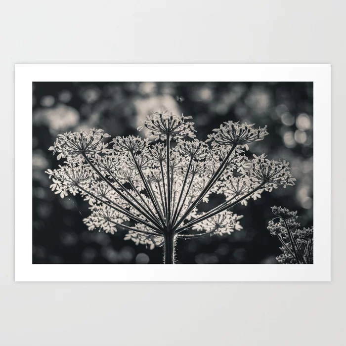 Forest's Crown. Nature Photography Art Print by lovefi