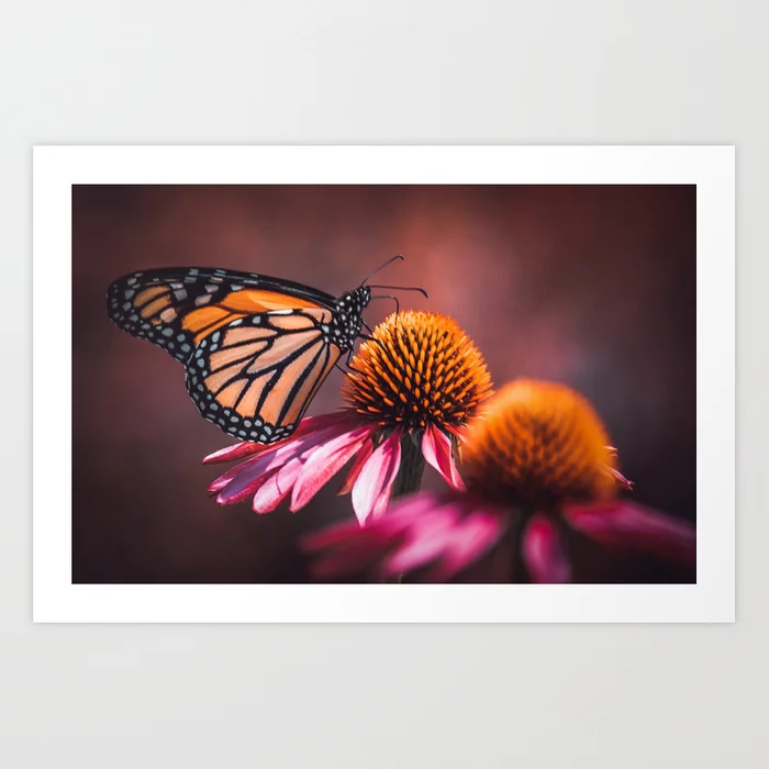 Resting Monarch. Print by lovefi