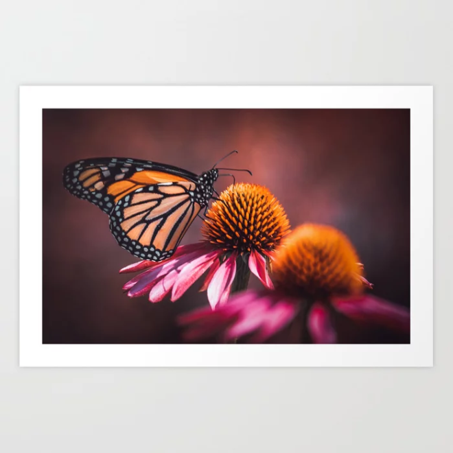 Resting Monarch. Print by lovefi