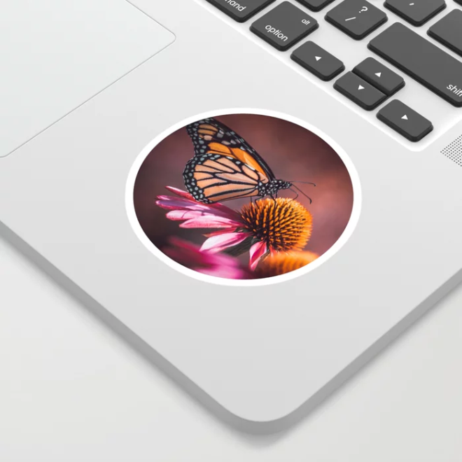 Resting Monarch. Butterfly Photograph Sticker by lovefi