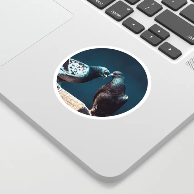 Pigeon Kiss. Just A Peck. Photograph Sticker by lovefi