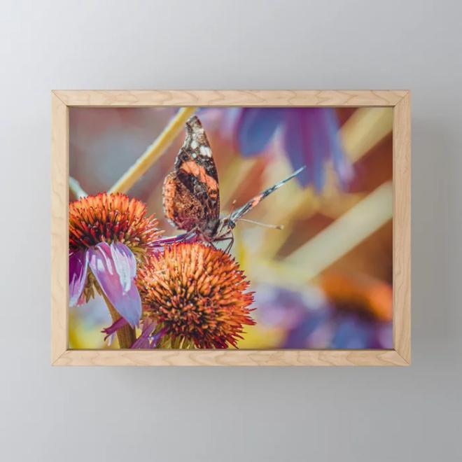 Landing Pad. Beautiful Butterfly Photograph Framed Mini Art Print by lovefi
