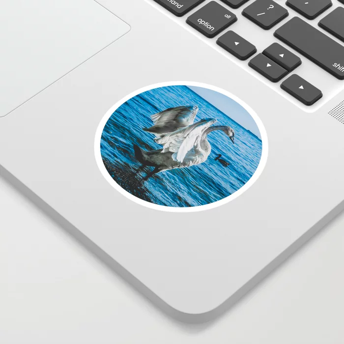 Spread Your Wings. Trumpeter Swan Photograph Sticker by lovefi