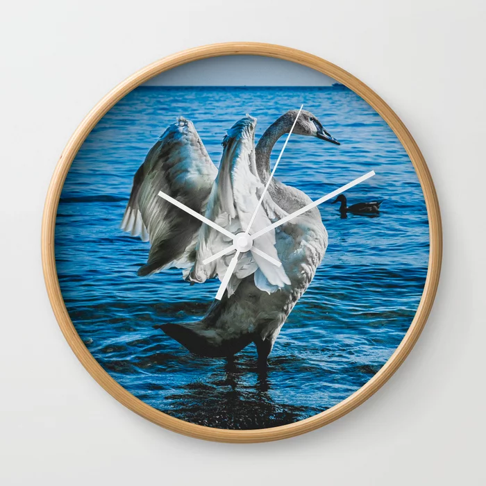 Spread Your Wings. Trumpeter Swan Photograph Wall Clock by lovefi