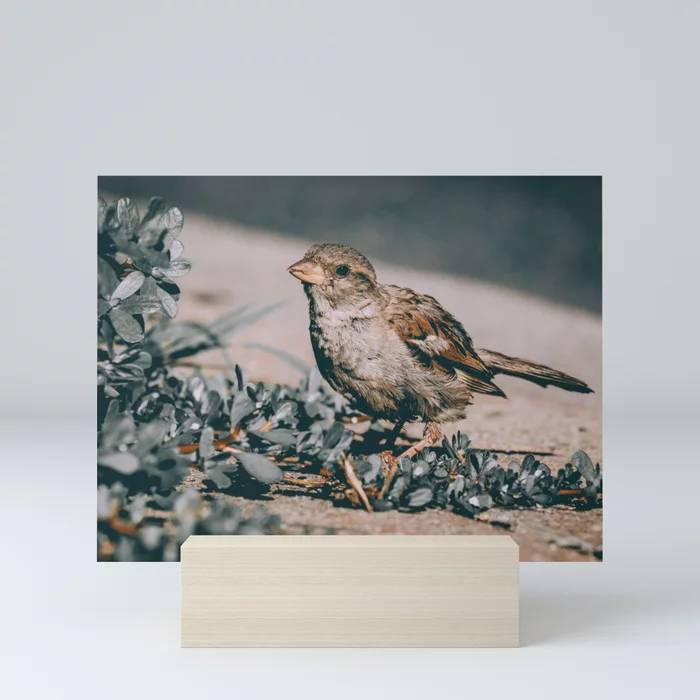 Summer Sparrow. Bird Photograph Mini Art Print by lovefi
