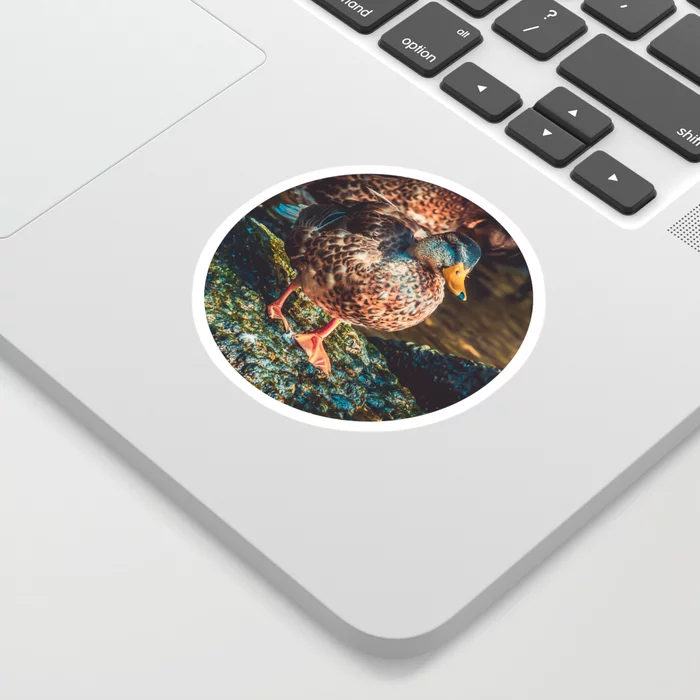 Duck Walk. Nature Photography Sticker by lovefi