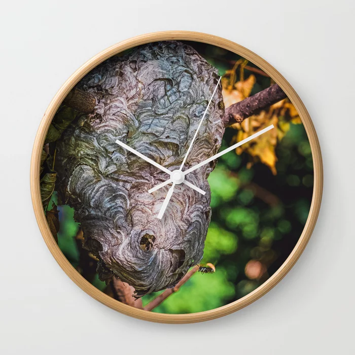 Bald-Faced Hornet's Hive. Nature Photograph Wall Clock by lovefi