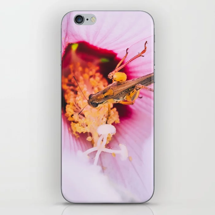 Grasshopper's Flower Snack. Photograph iPhone Case by lovefi