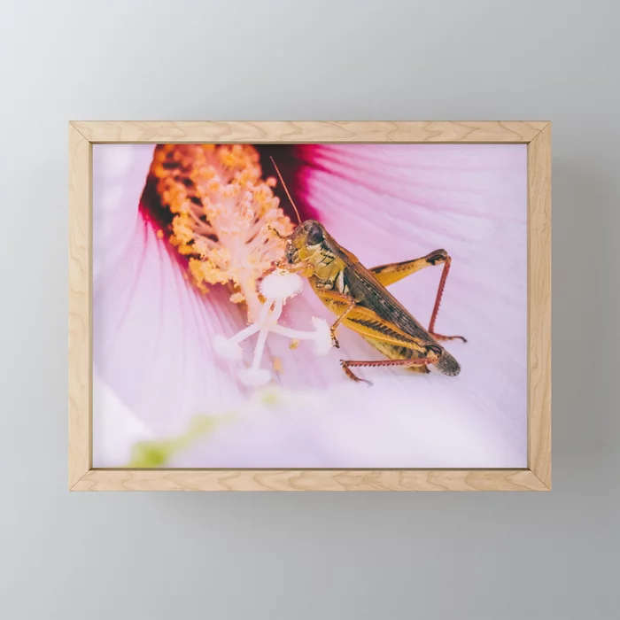 Grasshopper's Snack. Photograph Framed Mini Art Print by lovefi