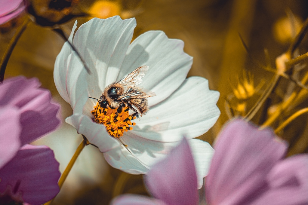 Bee Sides Photograph. by Stephen Geisel, Love-fi