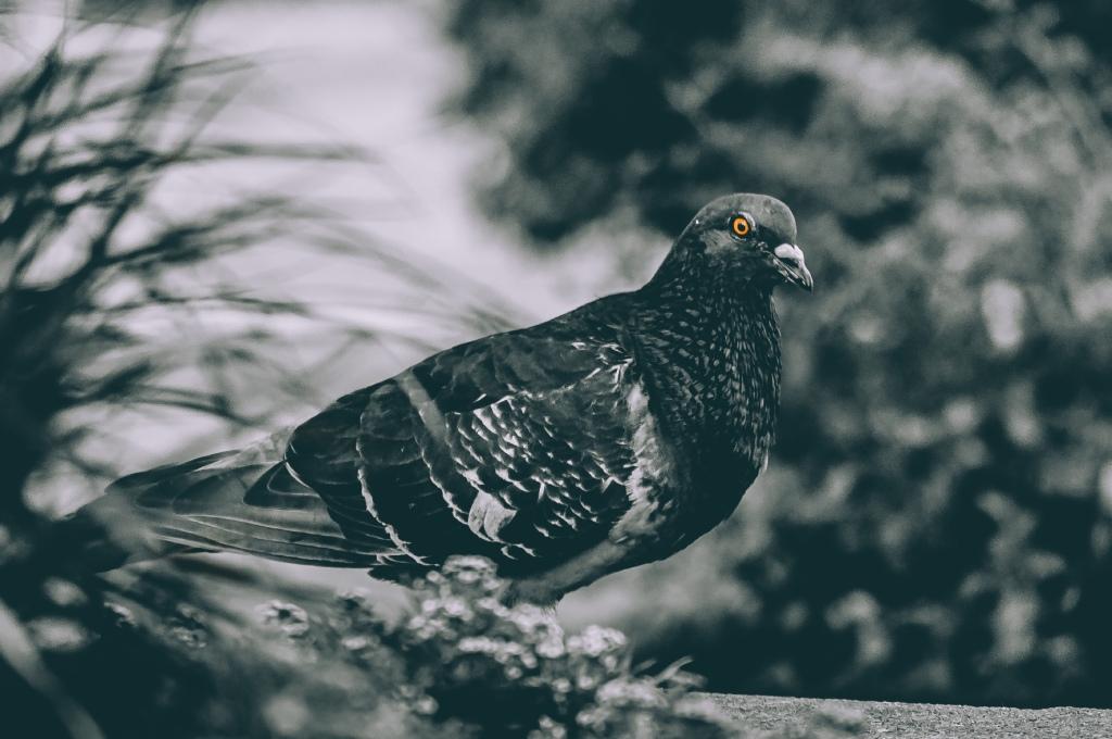 City Bird Photograph.  By Stephen Geisel, Love-fi
