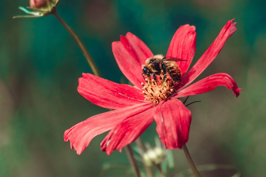 Pollen Collection II. By Stephen Geisel, Love-fi