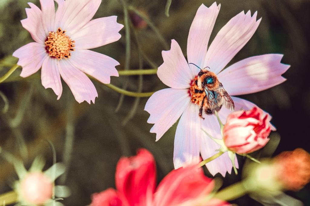 Bee Sides II. By Stephen Geisel, Love-fi