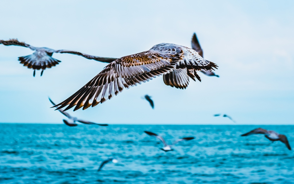 Flight of The Flock. By Stephen Geisel, Love-fi