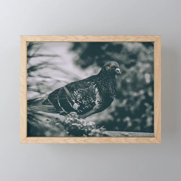 City Bird. Photograph Framed Mini Art Print by lovefi