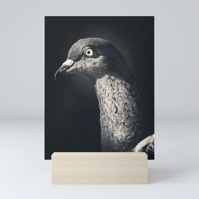 Pigeon Portrait Photograph. Mini Art Print by lovefi