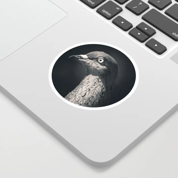 Pigeon Portrait Photograph. Sticker by lovefi