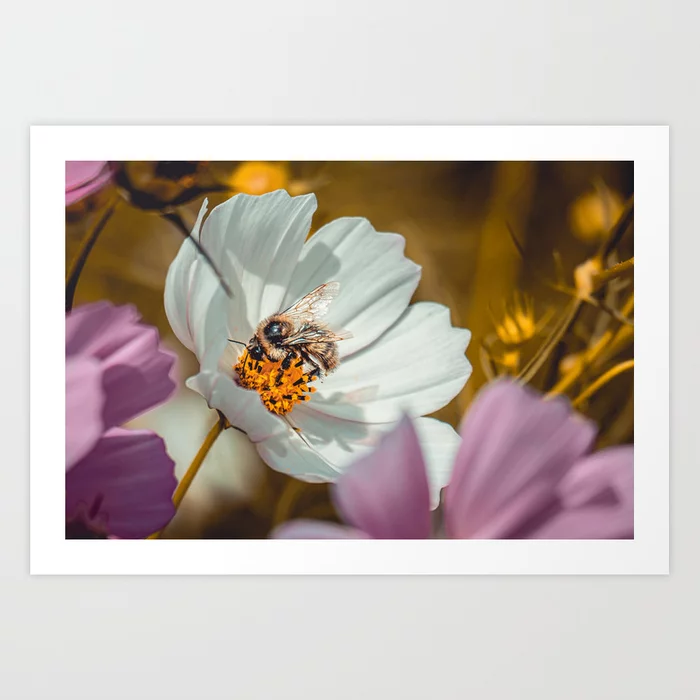 Bee Sides. Photograph Art Print by lovefi