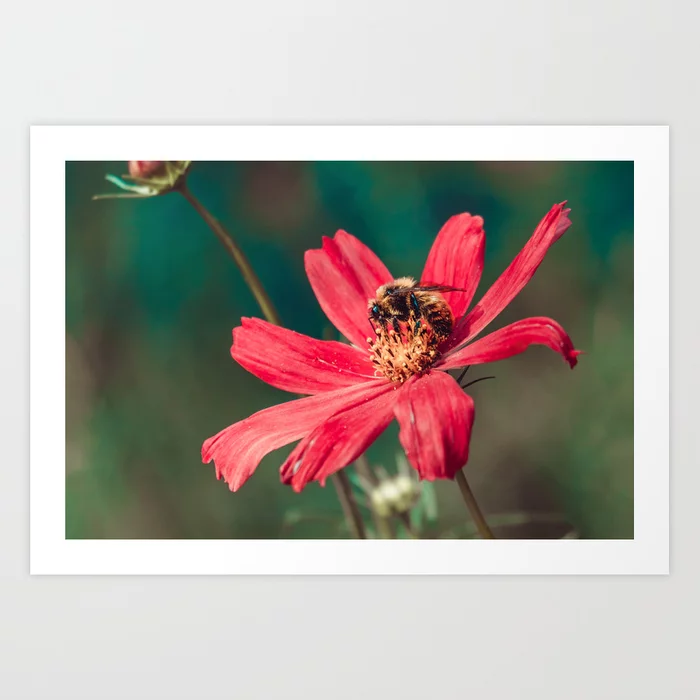 Pollen Collection II. Bee Photograph Art Print by lovefi