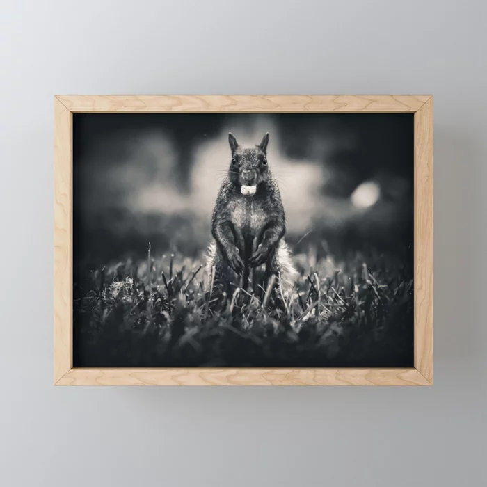 The Collector. Black and White Squirrel Photograph Framed Mini Art Print by lovefi