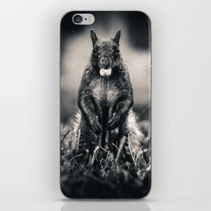 The Collector. Black and White Squirrel Photograph iPhone Skin by lovefi