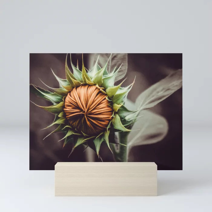 Sunflower Bud Photograph Mini Art Print by lovefi