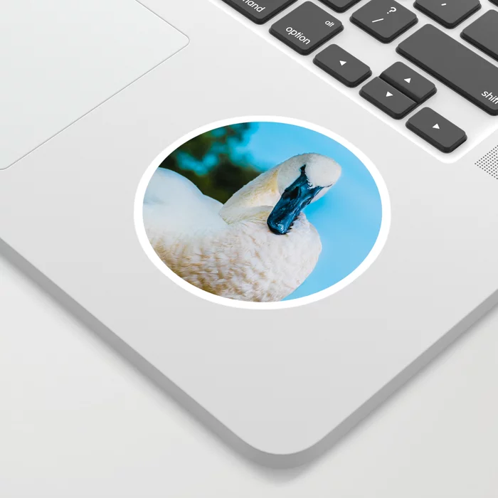 Swan Stance Photograph Sticker by lovefi
