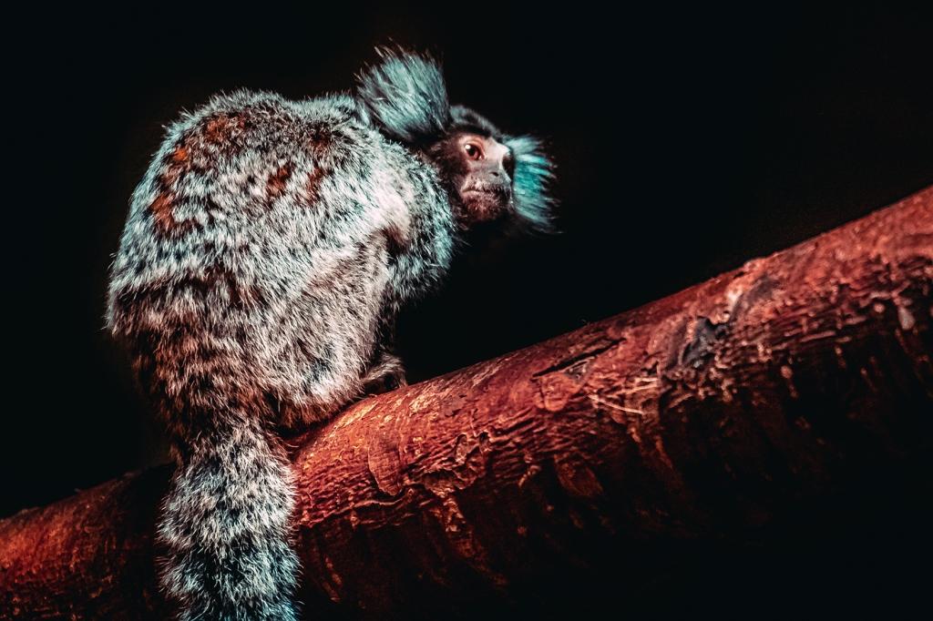 Mischievous Marmoset II. By Stephen Geisel, Love-fi