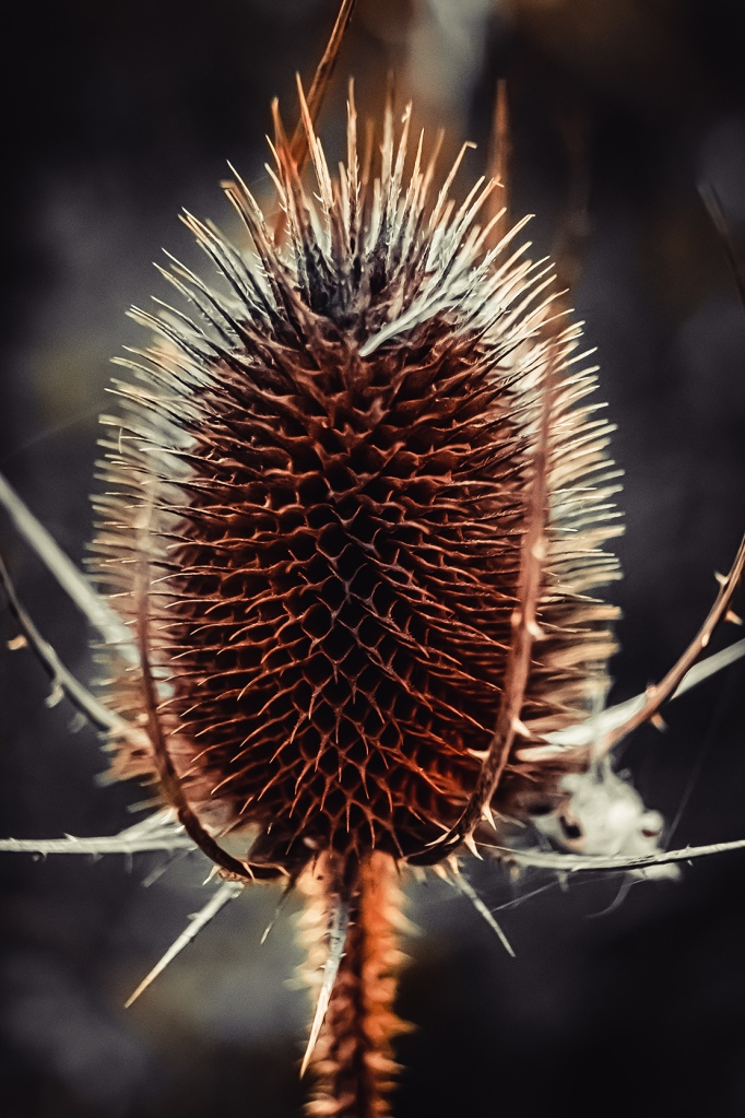Thistle By Stephen Geisel, Love-fi
