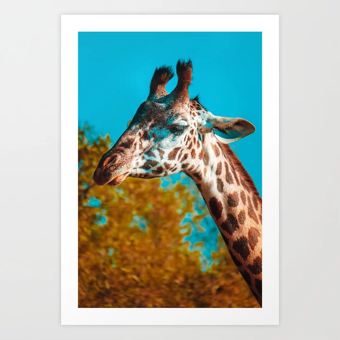 Gentle Giraffe Photograph Art Print by lovefi