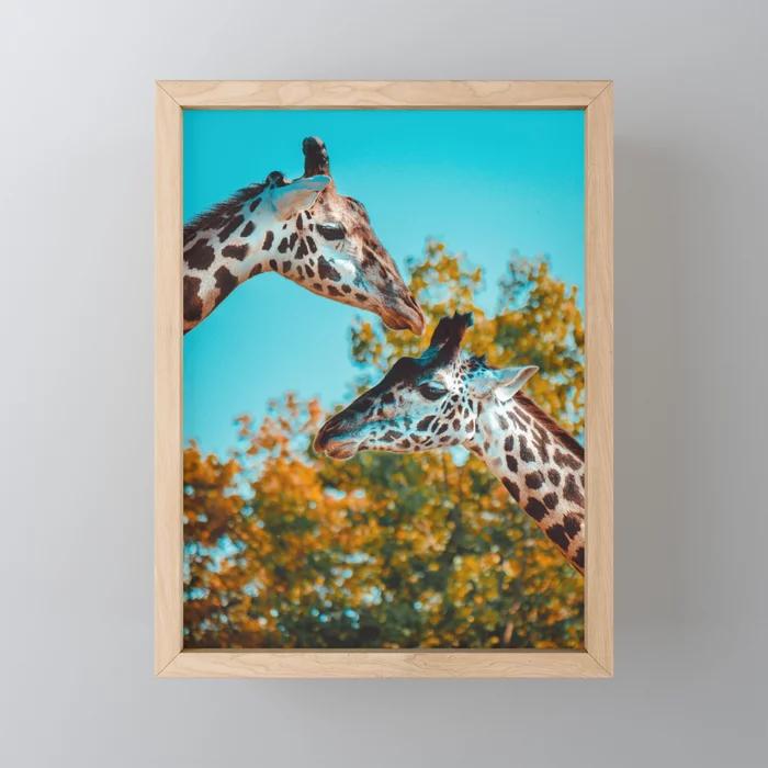 Gentle Giraffes Photograph Framed Mini Art Print by lovefi
