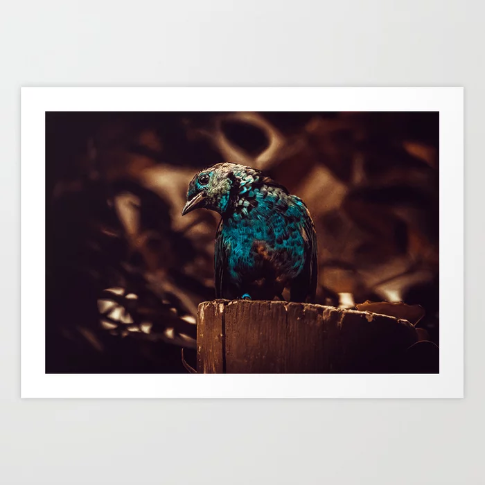 Blue Bird Photograph Art Print by lovefi
