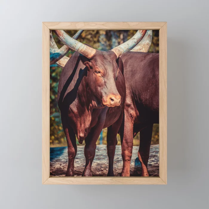 Chillin' Cattle Photograph Framed Mini Art Print by lovefi
