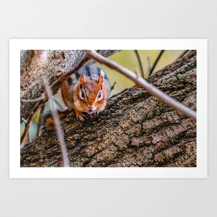 Chipmunk III. Photograph Art Print by lovefi