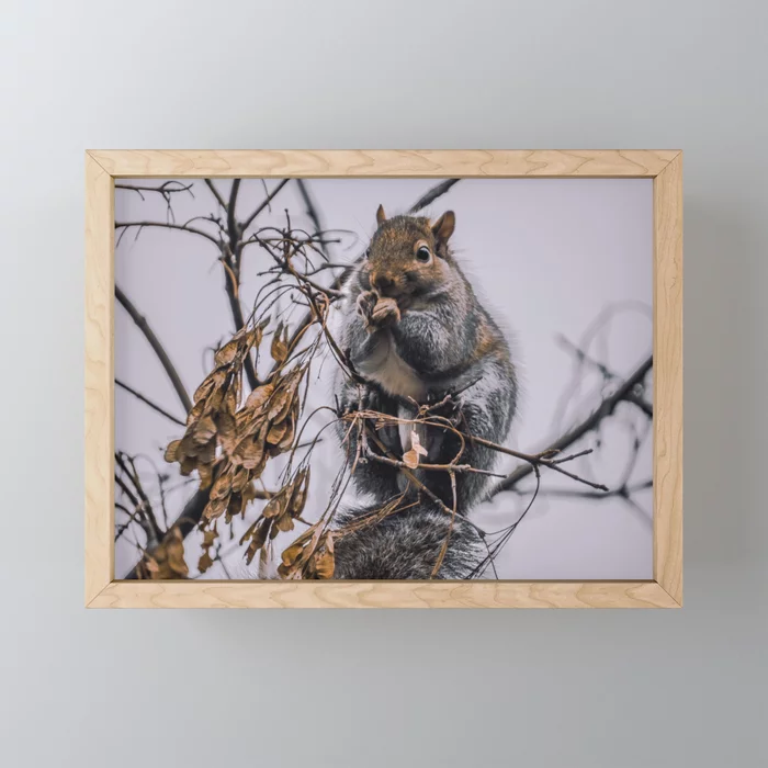 Rodents In The Tree, Photograph Framed Mini Art Print by lovefi