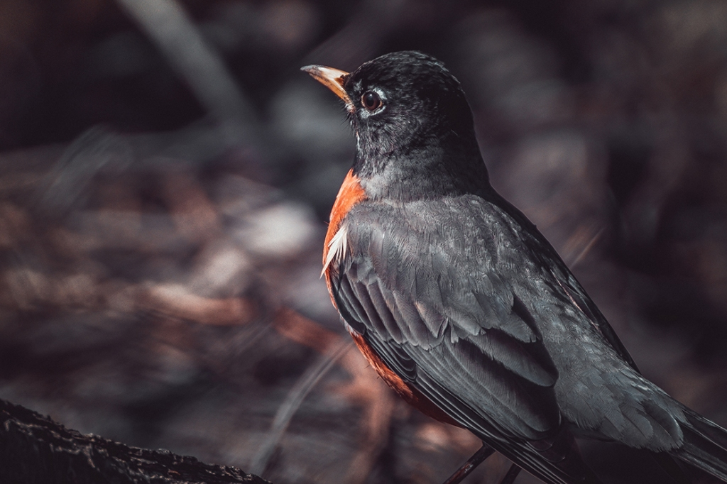 Robin in the Dark By Stephen Geisel, Love-fi