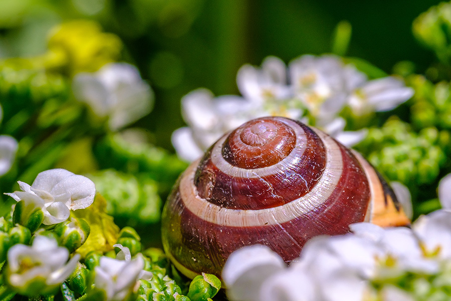 Abandoned Snail Shell Photograph. By Stephen Geisel, Love-fi
