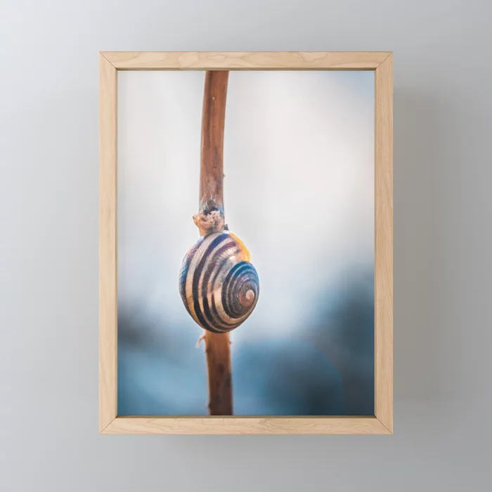 Hang Tight, Snail Photograph Framed Mini Art Print By Stephen Geisel, Love-fi