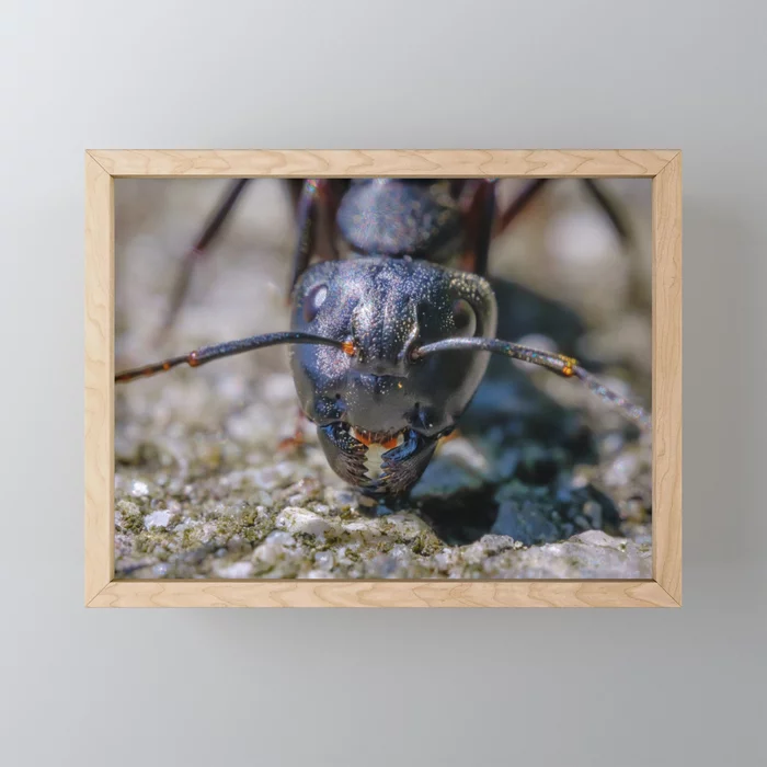 Happy Ant. Macro Photograph Mini Art Print By Stephen Geisel, Love-fi