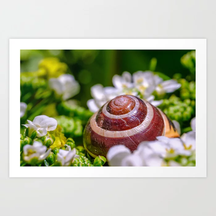 Abandoned Snail Shell. Macro Photograph Art Print by lovefi