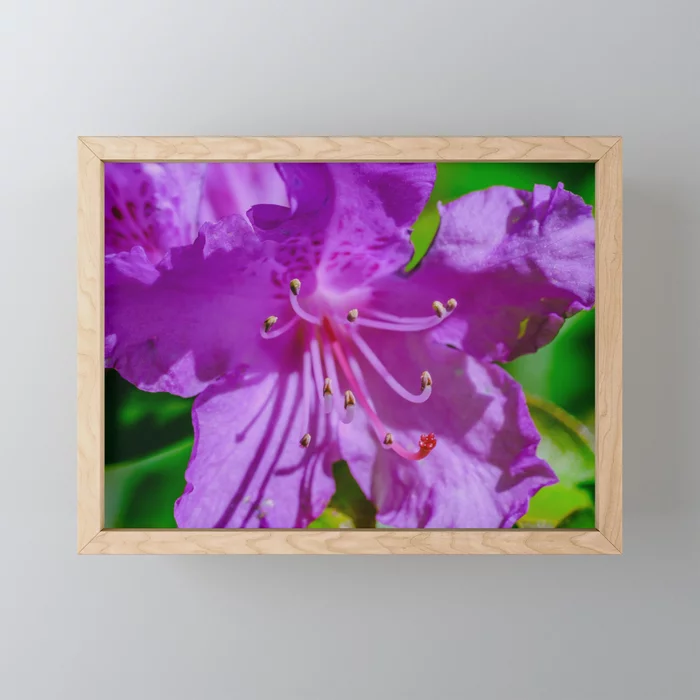 Purple Beauty. Flower Photograph Framed Mini Art Print